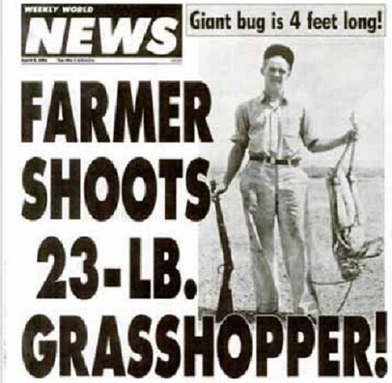 grasshopper50