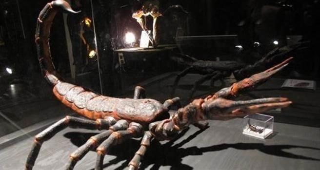 Brontoscorpio anglicus