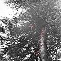 5 米高處的樹枝都折斷了