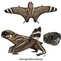 Anurognathus ammoni1