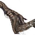 Anurognathus ammoni3