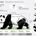 Giant Panda9