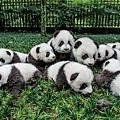 panda-mania-12