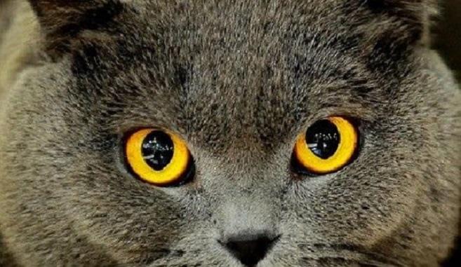 cat eyes12