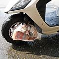 本來想噴輪胎保養劑,後來想想算了