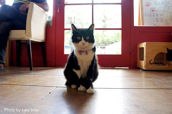 cat_06.jpg