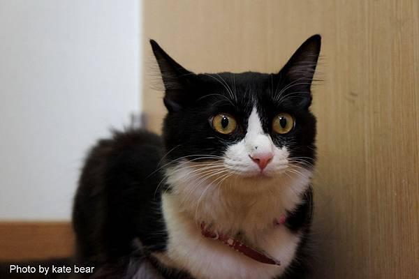 cat_09.jpg