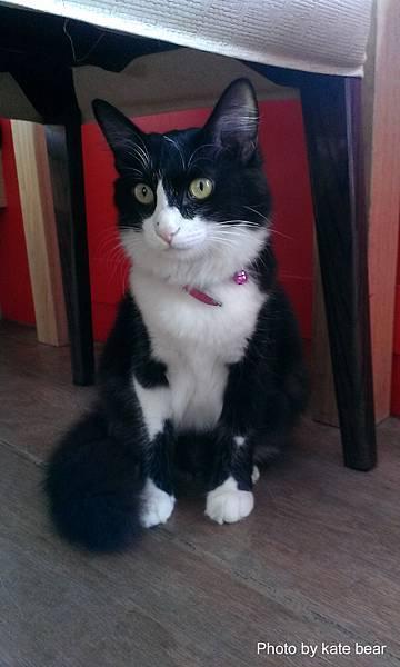 cat_08.jpg