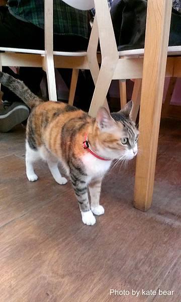 cat_14.jpg