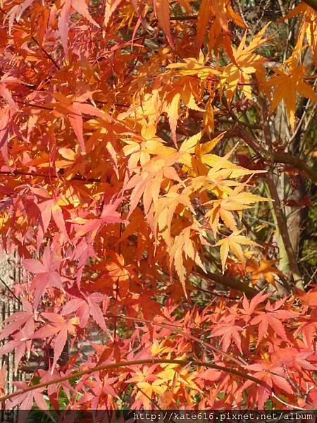 20121217 Kyoto 021