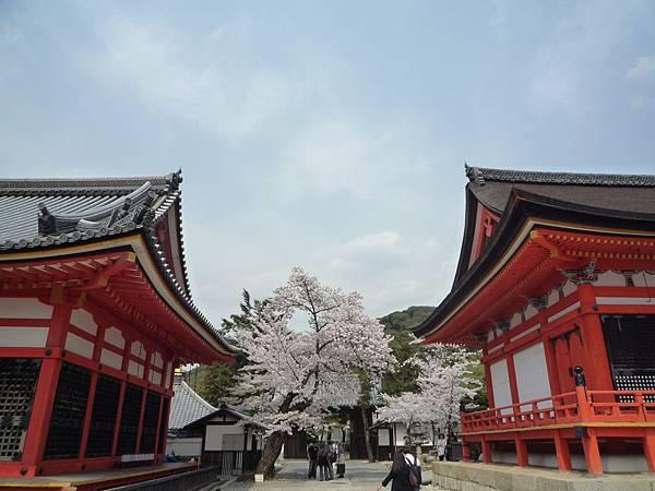 20110411 清水寺 085.JPG