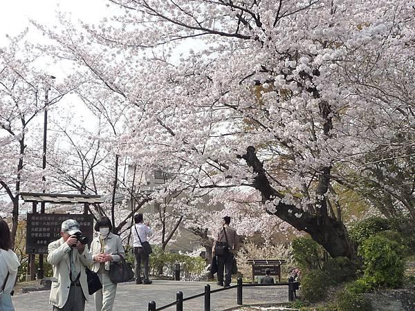 20110411 清水寺 146.JPG