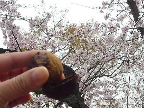 20110411 清水寺 074.JPG