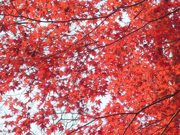 20101220 Nara 080.JPG