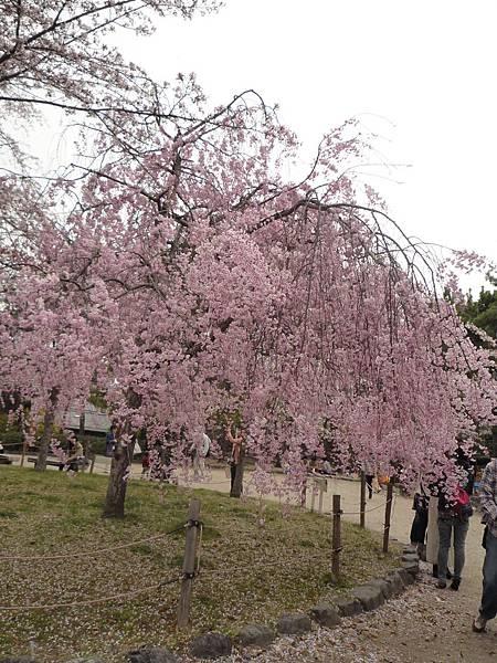 20110411 清水寺 174.JPG