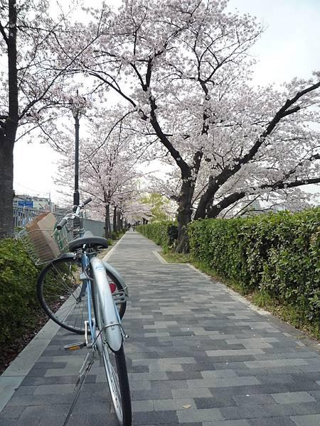 20110411 清水寺 014.JPG