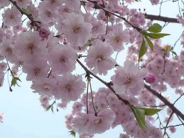20110411 清水寺 051.JPG