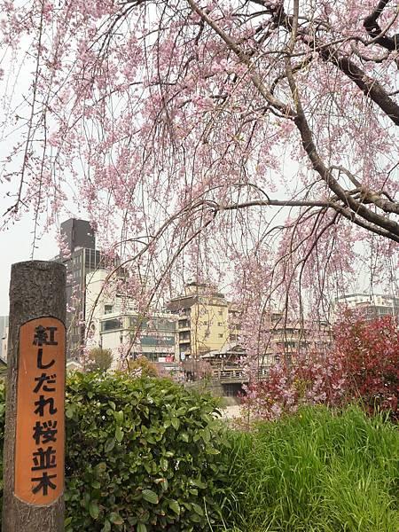 20110411 清水寺 026.JPG