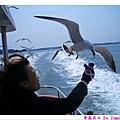 海鷗一直追著船跑