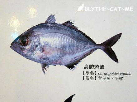網元魚坊 (48).JPG