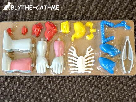 人體模型 (10).JPG