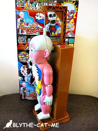人體模型 (17).JPG