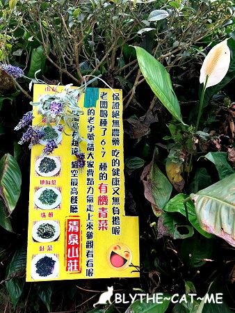 清泉山莊 (9).JPG