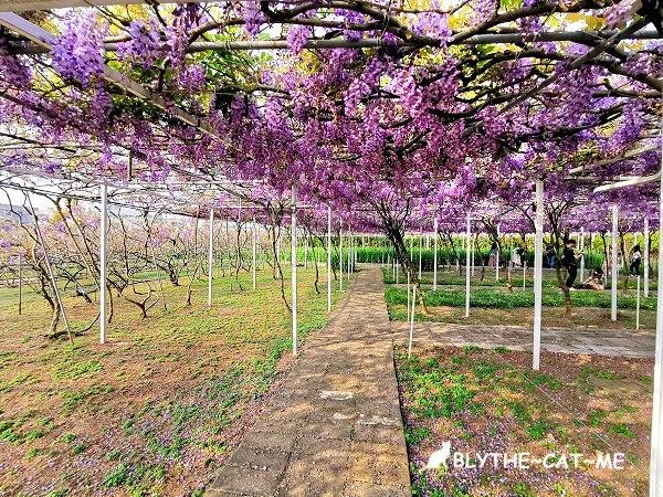 紫藤咖啡園 (1).jpg