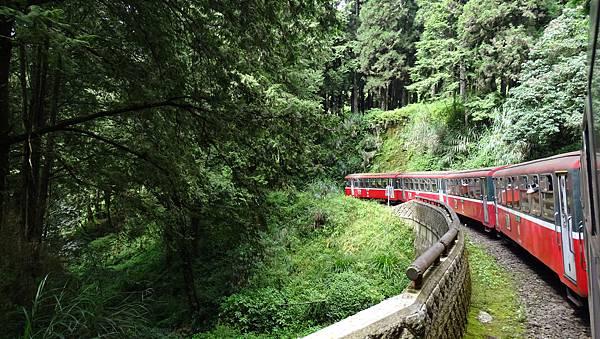 DSC01802-阿里山小火車神木線.JPG