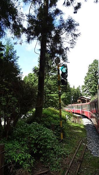 DSC01792-阿里山小火車神木線.JPG
