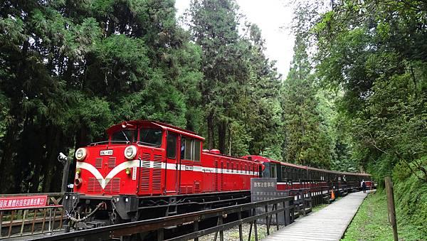 DSC01822-阿里山神木車站.JPG