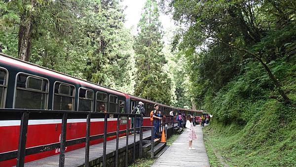 DSC01819-阿里山小火車神木線.JPG