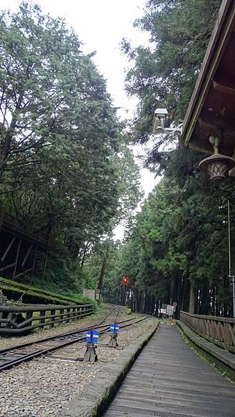 DSC01847-阿里山巨木群棧道一.JPG