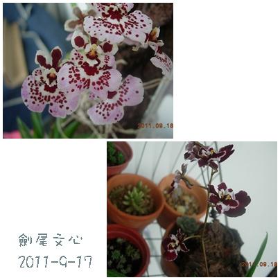 2011-9-19-03.jpg