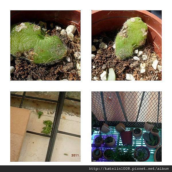 2011-10-23-05.jpg