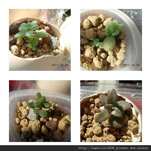 2011-10-23-06.jpg