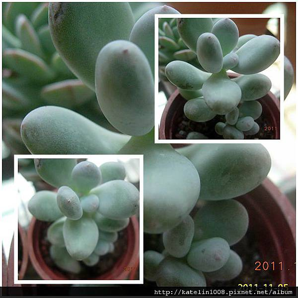 2011-11-05-08.jpg