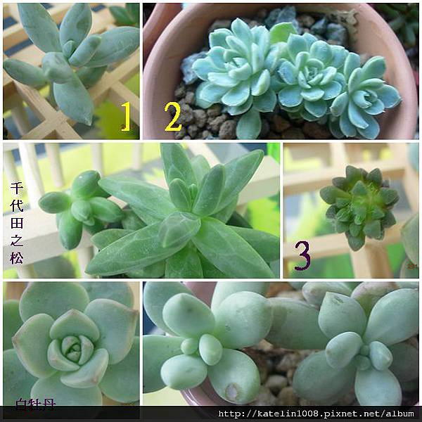 2011-11-19-02.jpg