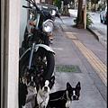 三隻一模一樣的小狗被主人關在門外