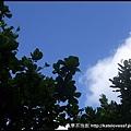 坐在公園樹下往天空看