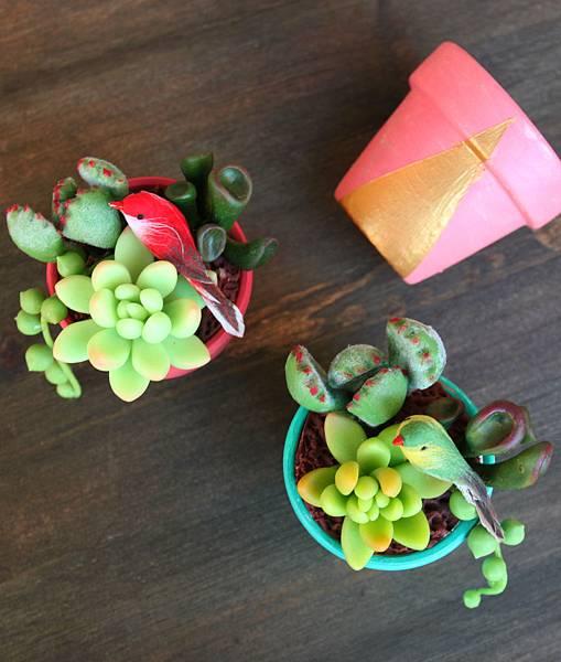 succulent plant 2