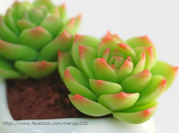吉娃蓮 粘土 多肉 succulent plant clay