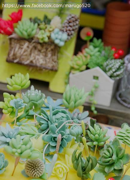 日本黏土多肉 succulent