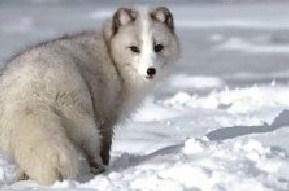 Animals_1001(1).jpg