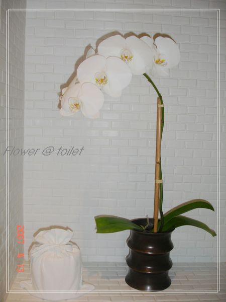 flower @ toilet.jpg