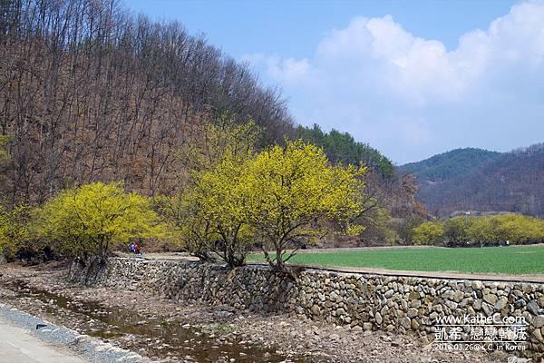 山茱萸景色