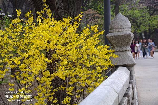 德壽宮之春