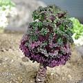長得像菜的奇特植物