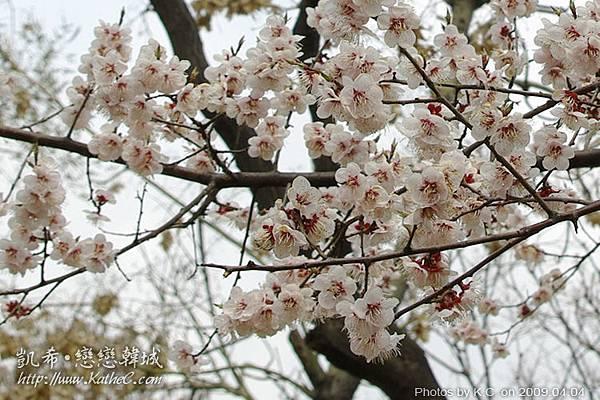 塔谷公園隨拍 / 看到櫻花啦~