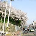 2010年4月 - 春櫻(1280x1024)